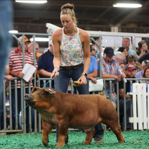 In the Market for a Duroc Pig?